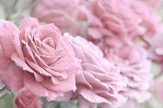 All The Soft Pink Roses Print By Jennie Marie Schell