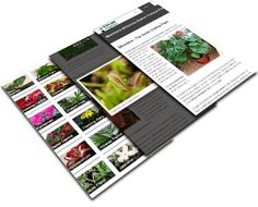 Plant Profiles with care tips and Secrets to Success