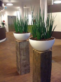 White planters on slices of beams as pedestals. I'd have three and one of them a water fountain or just a bowl with a water plant and a fish in it. White Planters, Indoor Planters, Planter Pots, Diy Water Fountain, Indoor Water Fountains, Indoor Water Features, Decoration Plante, Rustic Home Design, Water Walls