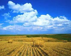 В Татарстане принята программа разработки и выпуска беспилотных средств для использования в земледелии. Этим занимаются в холдинге Агрополис. Ожидаемые инвестиции за ближайшие 5 лет составят $225 млн, выпуск первых беспилотных комбайнов намечен на 2018 год. По-расчетам он будет стоить на 15-20% больше традиционного комбайна. Совладельцы холдинга Агрополис - это Ростсельмаш (производитель сельхозтехники), Союз-Агро (Татарстан, холдинг), Cognitive Technology (занимается системами ИИ в области…