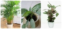 There are plants that grow without sunlight, they need indirect exposure, some even thrive in fluorescent light and here in this article we've listed some of the best plants to grow indoors. The obvious thing that everyone know is the fact that plants need sunlight to grow. They can't grow or develop properly without the …