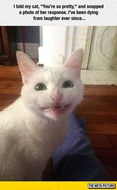 Pinterest board: @desi_galapagos  41 Funny Animal Pictures #FunnyCatPhotos