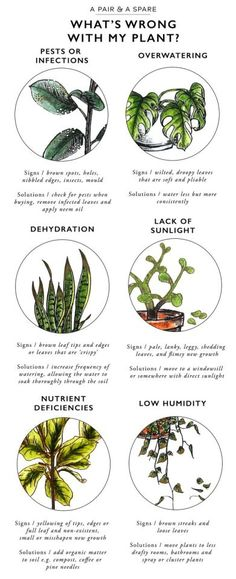 Keep Your Indoor Plants Alive With This Valuable Information! - The Cottage Market Keep Your Indoor Plants Alive With This Valuable Information! - The Cottage Market Container Gardening, Gardening Tips, Organic Gardening, Indoor Gardening, Gardening Services, Gardening Books, Vintage Gardening, Kitchen Gardening, Urban Gardening