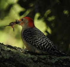 Bad day for lizard, good day bird!  Photo by Melissa Ferguson — National Geographic Your Shot