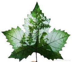 Check out these amazing 30 Creative Superb Art of Leaf Carving Leaf Crafts, Dry Leaf, Painted Leaves, Leaf Art, Fantastic Art, Awesome, Art Forms, Plant Leaves, Illustration Art
