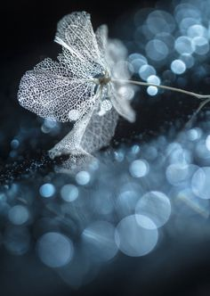 Winter flower by ShihyaKowatari, Fotografie van winter, ijs en natuur, ijskristallen en ijsbloemen, tuinieren, seizoenen, buiten