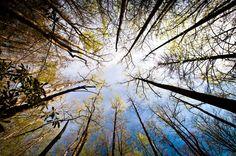 Sometimes we forget to look up ...Pisgah National Forest, North Carolina  www.douglasadamsphotography.com
