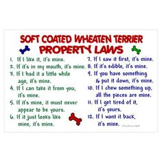 Soft Coated Wheaten Terrier Property Laws