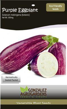 Striped Purple Eggplant Solanum Melongena Berejena Rayada de PR 100 Seeds