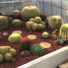 Cacti Garden 🌵😊 - Best Picture For Cactus tatuaje For Your Taste You are looking for something, and it is going to - Succulent Gardening, Succulent Care, Succulent Terrarium, Terrarium Wedding, Indoor Gardening, Succulent Arrangements, Cacti And Succulents, Planting Succulents, Watercolor Clipart