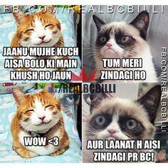 Funny Pics, Funny Pictures, Wow 3, Dil Se, Memes, Cats, Instagram, Fanny Pics, Fanny Pics