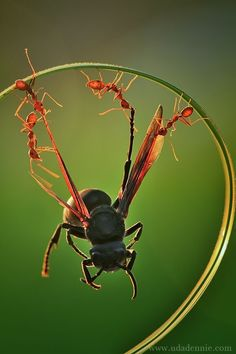 #Ants attack.