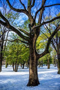 Tree by Akio Iwanaga on 500px