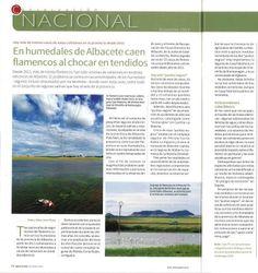Nota sobre la problemática de los tendidos eléctricos con los flamencos comunes en Albacete. Aparecida en el número 334 de la Revista QUERCUS, páginas 74 y 75.
