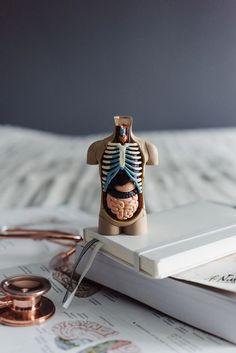 Millainen oli lääkiksen kolmosvuosi - Lisbet e. What was the third year of medicine - Lisbet e. Medical College, Medical School, Medical Photography, Medical Wallpaper, Nursing Wallpaper, Medical Quotes, University Of British Columbia, Medical Anatomy, Grey's Anatomy