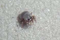 The adorable spider pictures thread