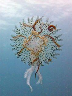 """ronbeckdesigns:  """"Jellyfish -wow!  """""""