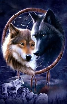 Dreamcatcher Wolves T-Shirt - Wolf T-Shirts - Big Face Wolf T-Shirts - Wolves on t-shirts - wolf shirts - beautiful wolves - animal shirts with wolves - christmas presents - ideas for christmas presents Beautiful Wolves, Animals Beautiful, Cute Animals, Beautiful Dogs, Wolf Love, Tier Wolf, Wolf Dreamcatcher, Dreamcatcher Wallpaper, Native American Wolf