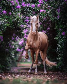 Lets visit the garden. For see more of cats images visit us on our website ! Horses And Dogs, Cute Horses, Pretty Horses, Horse Love, Wild Horses, Black Horses, Horse Photos, Horse Pictures, Most Beautiful Horses