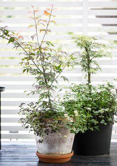 Bambula: Yrttilaatikot - vanha idis, uusi ilme