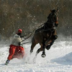 Yikes! Skiing with your horse, winter fun!