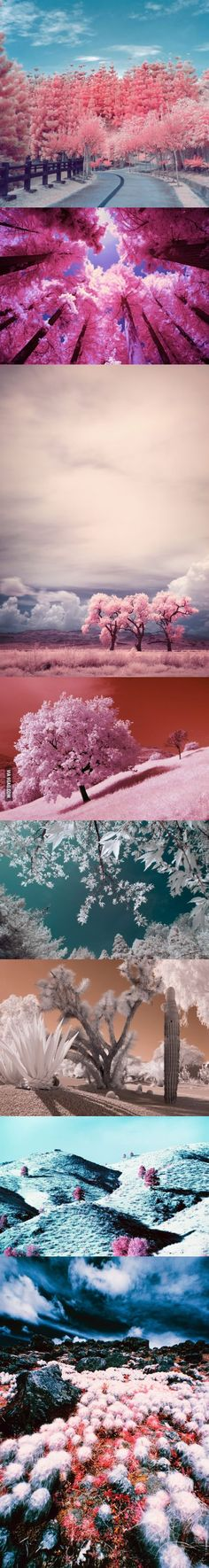 Spring as seen in Infrared