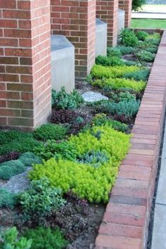 Sedums for along the driveway. Easy way to fill it in but would I have to worry about it getting trampled.
