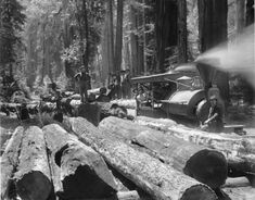Photograph of a log train loaded with logs for the mill, in a redwood forest, ca.1900 Antique Toys, Vintage Antiques, Redwood Forest, Old Trees, Old West, Vintage Photographs, Optical Illusions, American History, The Past