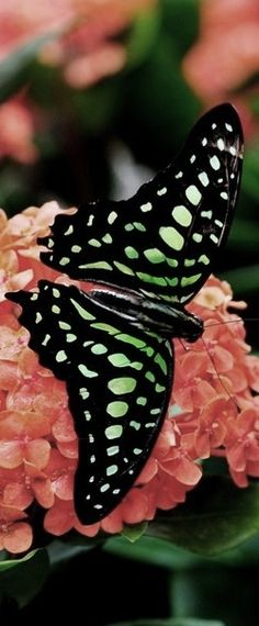 Life is a Beautiful Struggle: What the caterpillar calls the end of the world, the Master calls a butterfly..♥†♥