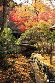 Erable du mont Misen #miyajima