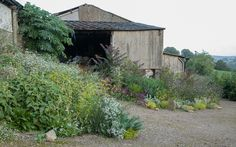 Self Seeders – Dig Delve – An online magazine about gardens, landscape, growing & making.