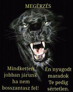 Karma, Funny Jokes, Motivation, Quotes, Life, Animals, Inspiration, Balerina, Asd