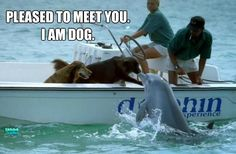 Pleased to meet you. I am Dog.