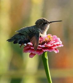 Baby humming bird