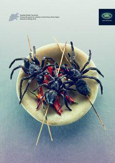 Toasted Goliath Tarantula: A favorite snack for children in the Orinoco River Basin. Adventure Rating: 8/10