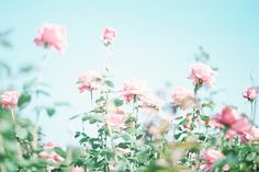 Image result for tumblr pastel wallpaper photography