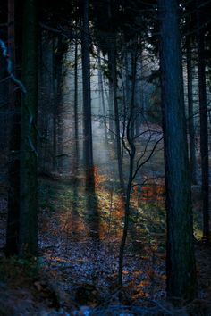 Lower Siesia, Poland - Beautiful forest light by Marcin Gwozdz [OC][2000x3000]