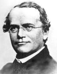 Johann Gregor Mendel,1822-1884-Gregor Johann Mendel  kalıtım biliminin babası olarak anılan Avusturyalı bilim adamı, Mendel kanunlarının mucidi ve rahip. Kalıtım biliminin öncüsü botanikçi, bitkiler üzerine yaptığı çalışmalarda, bir türün özelliklerinin kalıtım yoluyla sonraki kuşaklara aktarıldığını bulmuştur.
