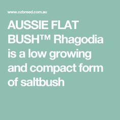AUSSIE FLAT BUSH™ Rhagodia is a low growing and compact form of saltbush