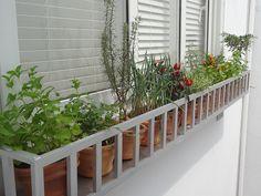 Como fazer uma horta dentro de casa - Gorete Colaço