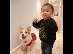 Adorable Baby and Corgi Play Fetch Together Corgi Videos, Corgi Gif, Great Videos, Corgis, Pick One, Runners, Cute Babies, Play, Funny