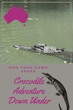 Crocodiles in Australia, travels down under Crocodile Facts, Crocodile Dundee, Australian Party, Komodo Dragon, Visit Australia, Crocodiles, National Geographic, Cruise, Adventure