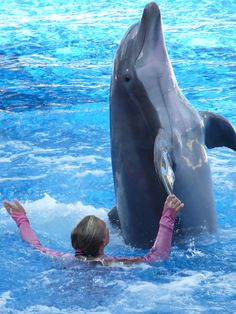 My dream of swimming with dolphins will come dream one day