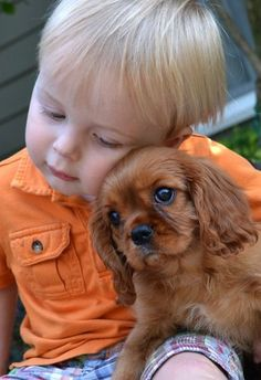 Little Boy & King Charles Spaniel  Puppy