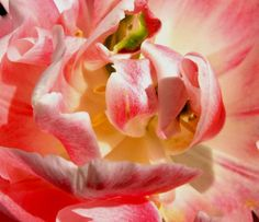 floral up close and personal photograph by paradisereal on Etsy, $27.00