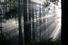 Sunbeams through the trees in Capilano Park, North Vancouver, British Columbia