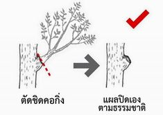 Tree Pruning, Big Tree, Landscape, Home Decor, Gardens, Happy, Nature, Scenery, Decoration Home