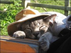 This adventurous kitty went backpacking with his human friends through the US and South America.