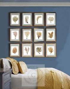 This Is A Set Of 12 Fabulously Beachy Sea Coral Reproduction Art Prints  Adapted From 1800s