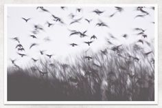 Blackbirds Fine Art Photography by andreahurleyart via Etsy Animal Photography, Fine Art Photography, Photography Styles, Conceptual Photography, Art Sombre, Animal Movement, Merle, Female Photographers, Black And White Pictures